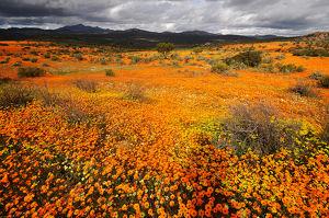 SÜDAFRIKA - LESOTHO - SWASILAND