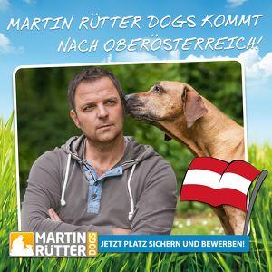 Informationstag: Traumberuf Hundetrainer - Studium & Markenlizenzierung bei Martin Rütter DOGS