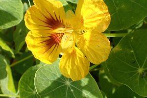 Gesund durch Herbst und Winter-Immunstärker aus der Pflanzenwelt