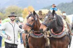 Pferdeherbst Mils 2018