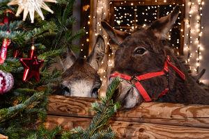 Weihnachtsmarkt & Wintermärchen Gut Aiderbichl Henndorf
