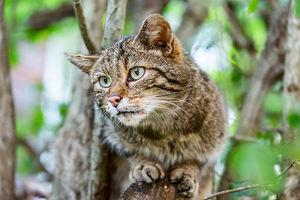 Wildkatzen-Nachtwanderung