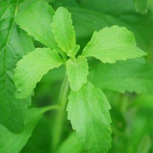 Stevia, Erythrit und Xylit – Anwendung in Küche und bei Zahnpflege