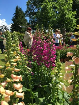 Kunst und Gartenzauber