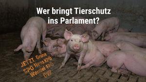 Podiumsdiskussion: Tierschutz im Parlament?
