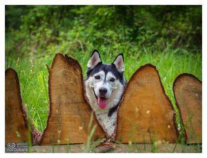Hundespaziergang mit gratis Fotoshooting