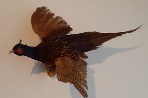 Kulturvogelpreisverleihung 2020